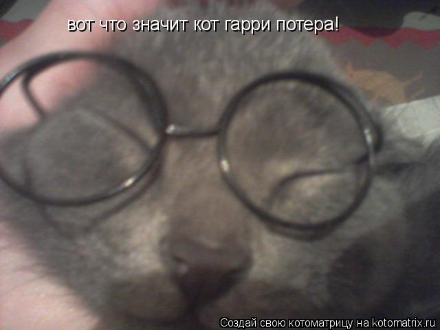 Котоматрица: вот что значит кот гарри потера!