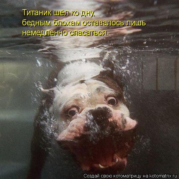 Котоматрица: Титаник шёл ко дну,  бедным блохам оставалось лишь немедленно спасаться.
