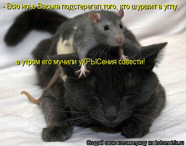 Котоматрица: - Всю ночь Васька подстерегал,того, кто шуршит в углу, а утром его мучили уКРЫСения совести!