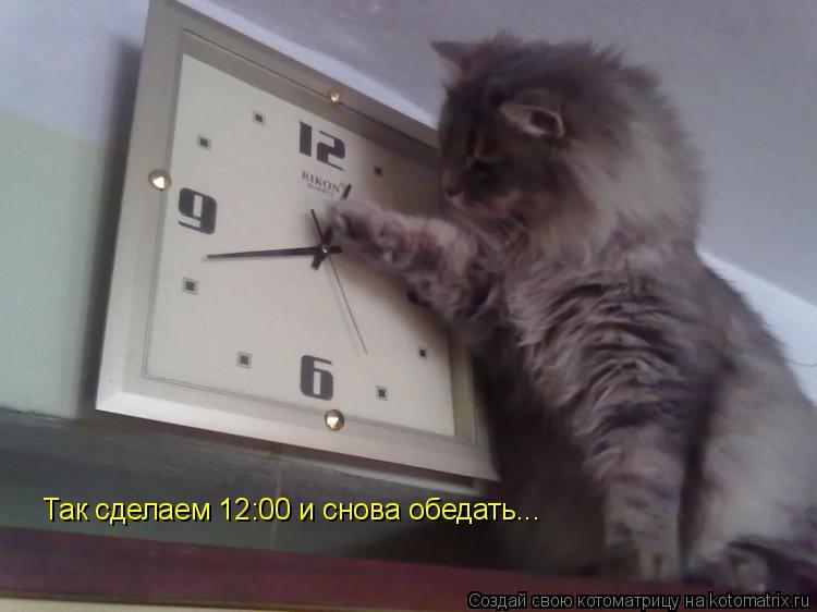 Котоматрица: Так сделаем 12:00 и снова обедать...