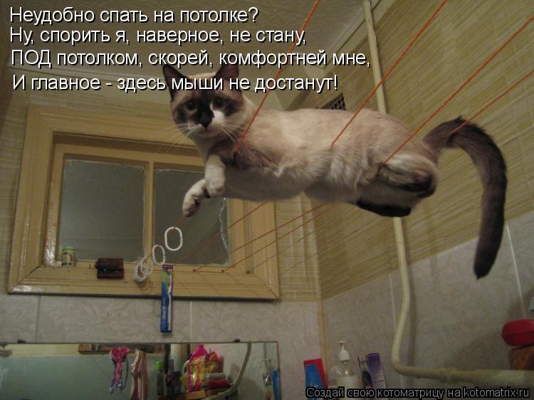Котоматрица - Неудобно спать на потолке? Ну, спорить я, наверное, не стану, ПОД пото