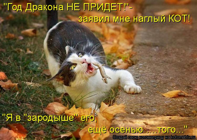 Котоматрица -