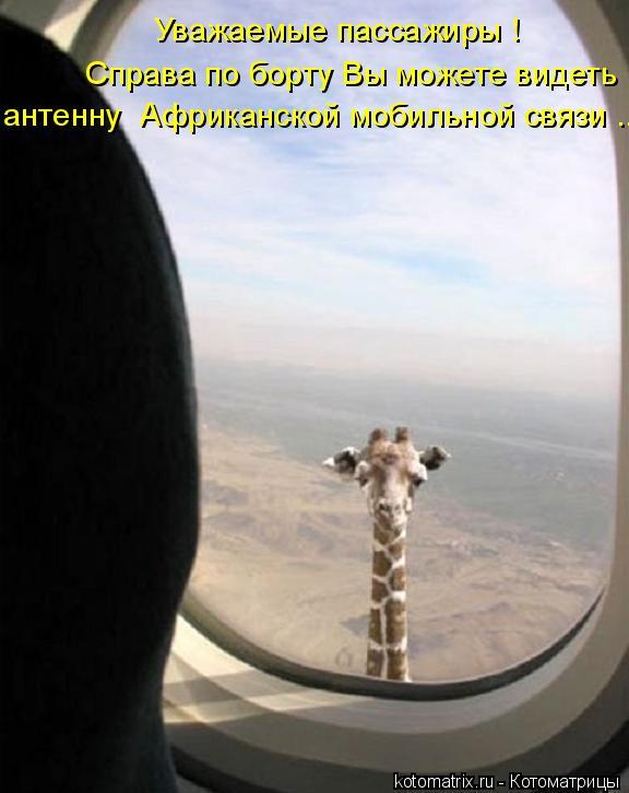 Котоматрица - Уважаемые пассажиры ! Справа по борту Вы можете видеть антенну  Африка