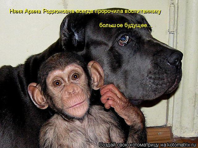 Котоматрица: Няня Арина Родионовна всегда пророчила воспитаннику  большое будущее...