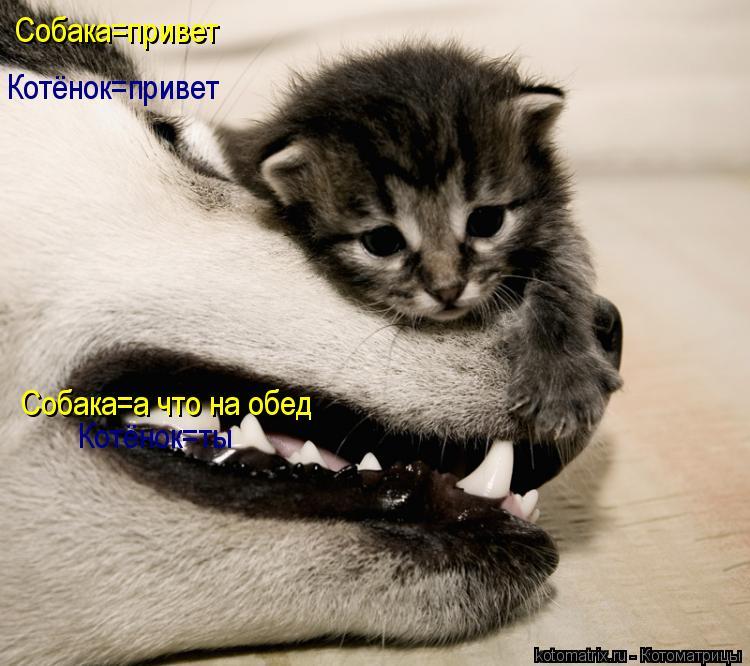 Котоматрица: Собака=привет Котёнок=привет Собака=а что на обед Котёнок=ты