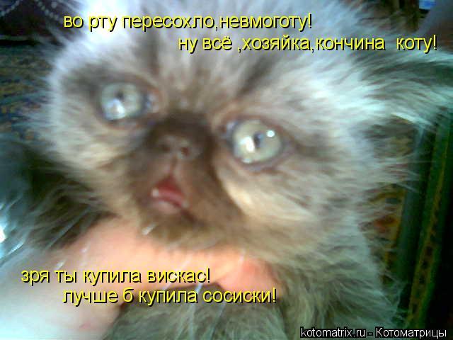 Котоматрица: во рту пересохло,невмоготу!  ну всё ,хозяйка,кончина  коту! зря ты купила вискас! лучше б купила сосиски!