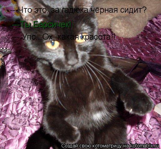 Котоматрица: ---Что это, за гадюка чёрная сидит? ---Ты Барсичек! --- Упс...Ох, какая красота!!