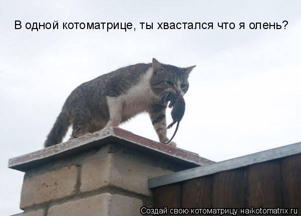 Котоматрица: В одной котоматрице, ты хвастался что я олень?