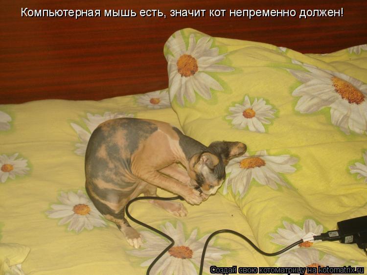 Котоматрица: Компьютерная мышь есть, значит кот непременно должен!