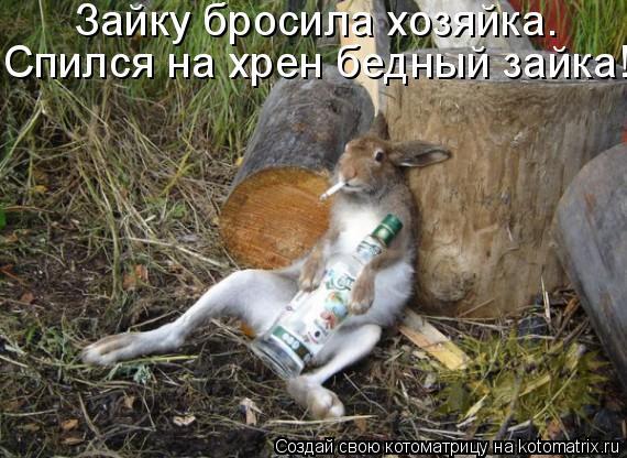 Котоматрица: Зайку бросила хозяйка. Спился на хрен бедный зайка!