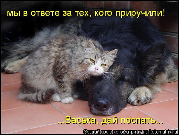 Котоматрица: мы в ответе за тех, кого приручили! ...Васька, дай поспать...