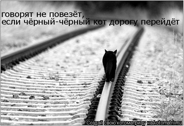 Котоматрица: говорят не повезёт,  если чёрный-чёрный кот дорогу перейдёт