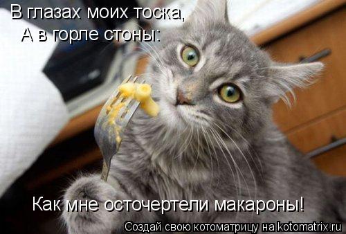 Котоматрица: В глазах моих тоска, А в горле стоны: Как мне осточертели макароны!