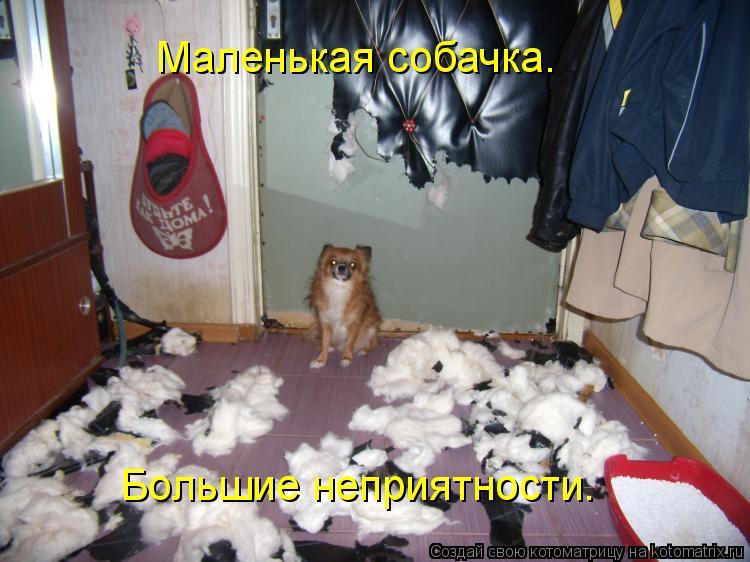 Котоматрица: Маленькая собачка.  Большие неприятности.