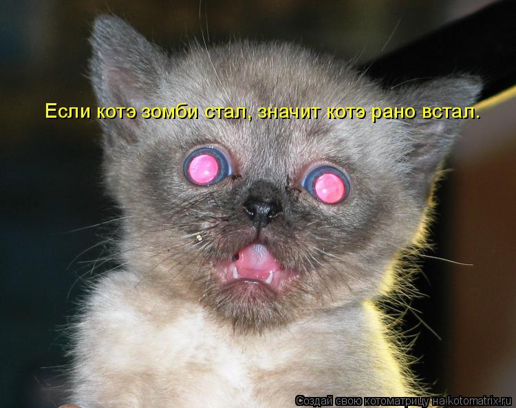 Котоматрица: Если котэ зомби стал, значит котэ рано встал.