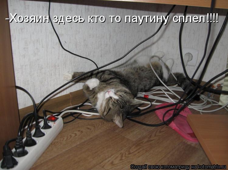 Котоматрица: -Хозяин здесь кто то паутину сплел!!!!