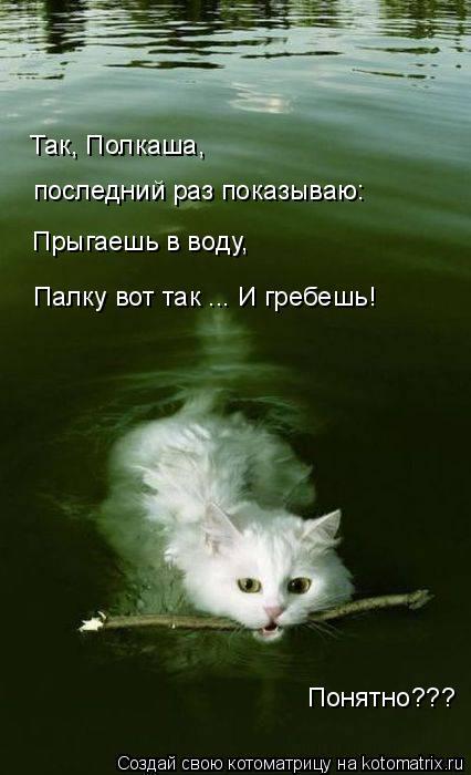 Котоматрица: Так, Полкаша, последний раз показываю: Прыгаешь в воду, Палку вот так ... И гребешь! Понятно???