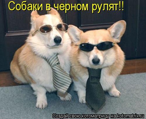 Котоматрица: Собаки в черном рулят!!