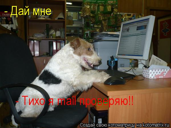 Котоматрица: - Дай мне - Тихо я mail проверяю!!