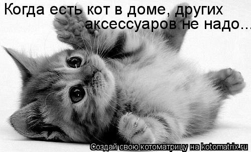 Котоматрица: Когда есть кот в доме, других  аксессуаров не надо...
