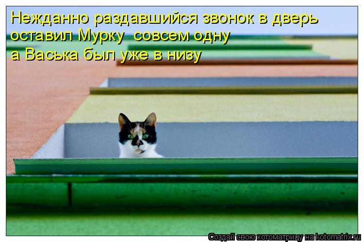 Котоматрица: Нежданно раздавшийся звонок в дверь оставил Мурку  совсем одну а Васька был уже в низу