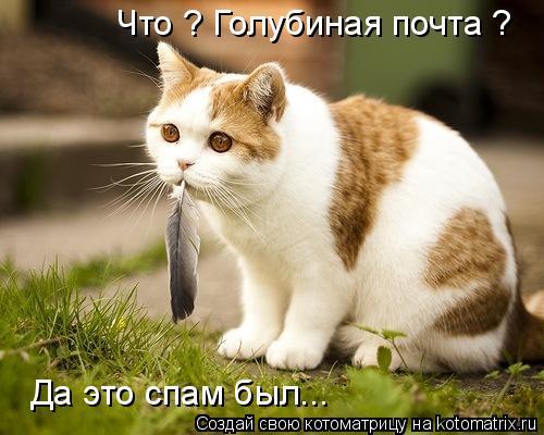 http://kotomatrix.ru/images/lolz/2012/01/06/1077707.jpg