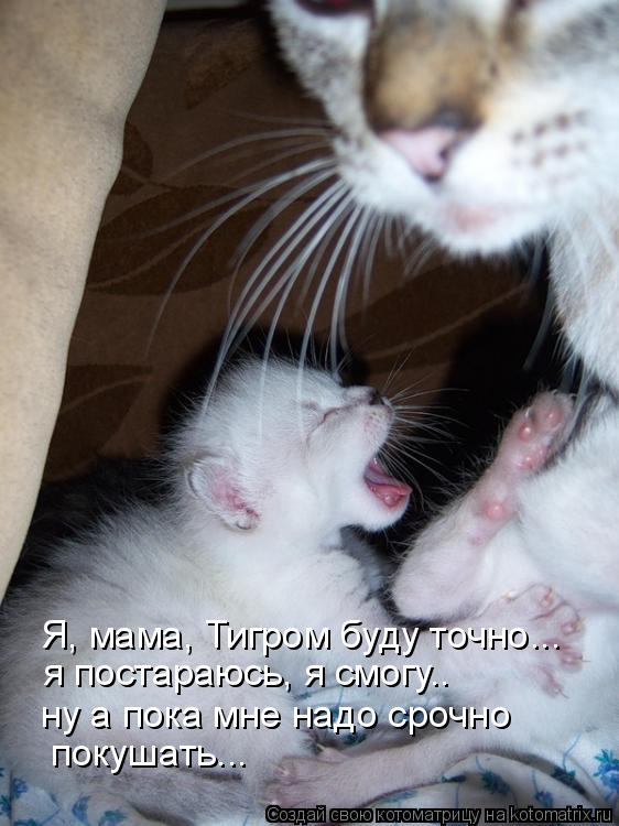 Котоматрица: покушать... ну а пока мне надо срочно   я постараюсь, я смогу.. Я, мама, Тигром буду точно...