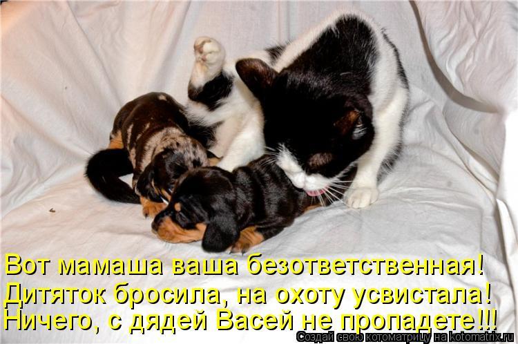 Котоматрица: Вот мамаша ваша безответственная! Дитяток бросила, на охоту усвистала! Ничего, с дядей Васей не пропадете!!!