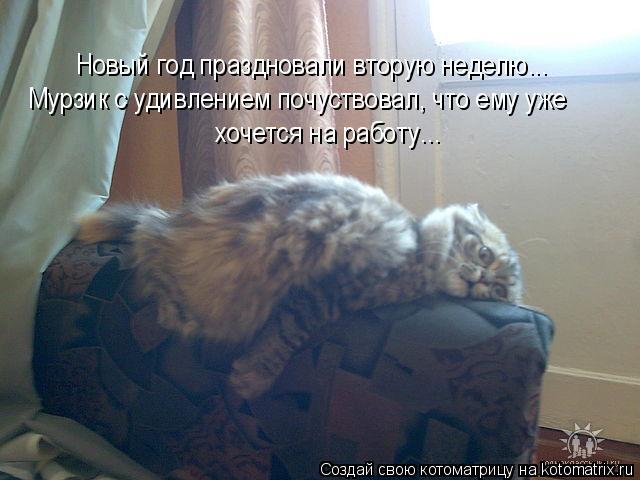 Котоматрица: Новый год праздновали вторую неделю... Мурзик с удивлением почуствовал, что ему уже  хочется на работу...