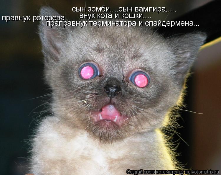 Котоматрица: cын зомби....сын вампира.....  праправнук терминатора и спайдермена... внук кота и кошки.... правнук ротозёва....
