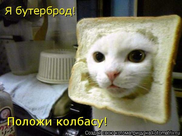 Котоматрица: Я бутерброд! Положи колбасу!