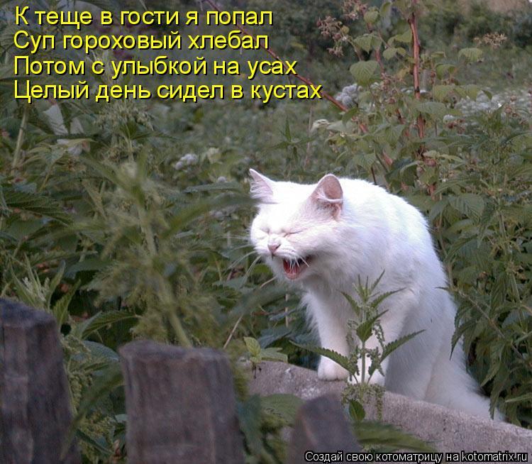 Котоматрица: К теще в гости я попал Суп гороховый хлебал Потом с улыбкой на усах Целый день сидел в кустах