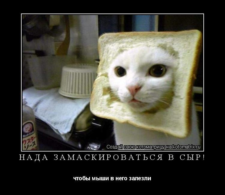 Котоматрица: Нада замаскироваться в сыр! чтобы мыши в него залезли