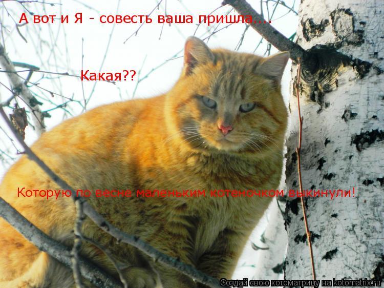 Котоматрица: А вот и Я - совесть ваша пришла....  Какая?? Которую по весне маленьким котеночком выкинули!
