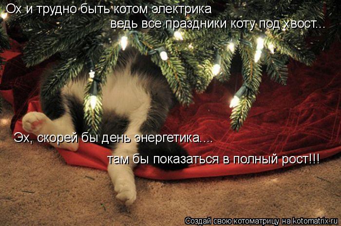 Котоматрица: Ох и трудно быть котом электрика   ведь все праздники коту под хвост...  Эх, скорей бы день энергетика....   там бы показаться в полный рост!!!