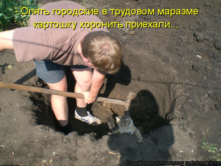 Котоматрица: - Опять городские в трудовом маразме  картошку хоронить приехали...