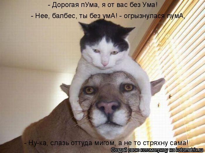 Котоматрица: - Дорогая пУма, я от вас без Ума! - Ну-ка, слазь оттуда мигом, а не то стряхну сама!  - Нее, балбес, ты без умА! - огрызнулася пумА,