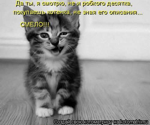 Котоматрица: Да ты, я смотрю, не и робкого десятка, покупаешь котенка, не зная его описания... СМЕЛО!!!