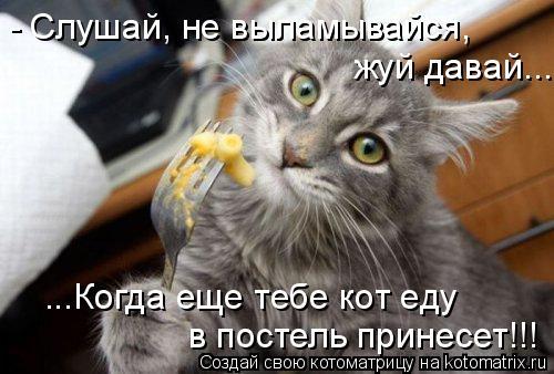 Котоматрица - - Слушай, не выламывайся, жуй давай... ...Когда еще тебе кот еду  в по
