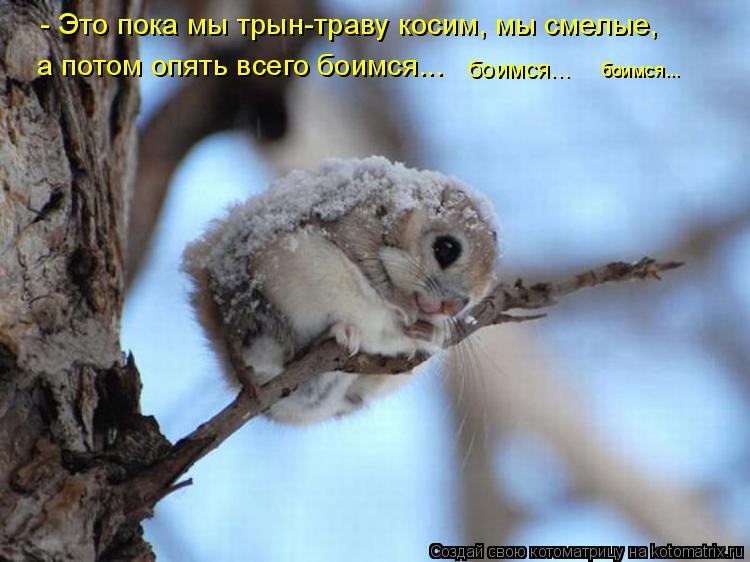 http://kotomatrix.ru/images/lolz/2012/01/10/1080110.jpg