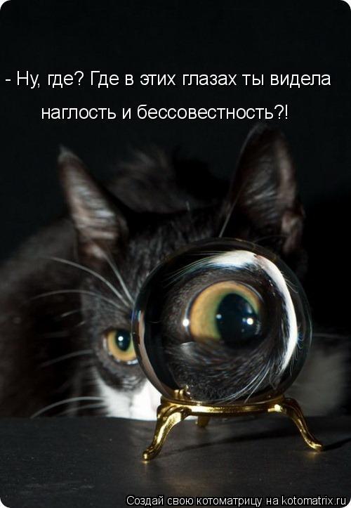Котоматрица - - Ну, где? Где в этих глазах ты видела наглость и бессовестность?!