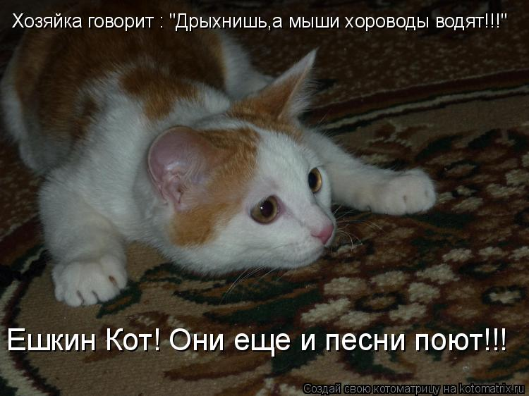 """Котоматрица - Хозяйка говорит : """"Дрыхнишь,а мыши хороводы водят!!!"""" Ешкин Кот! Они е"""
