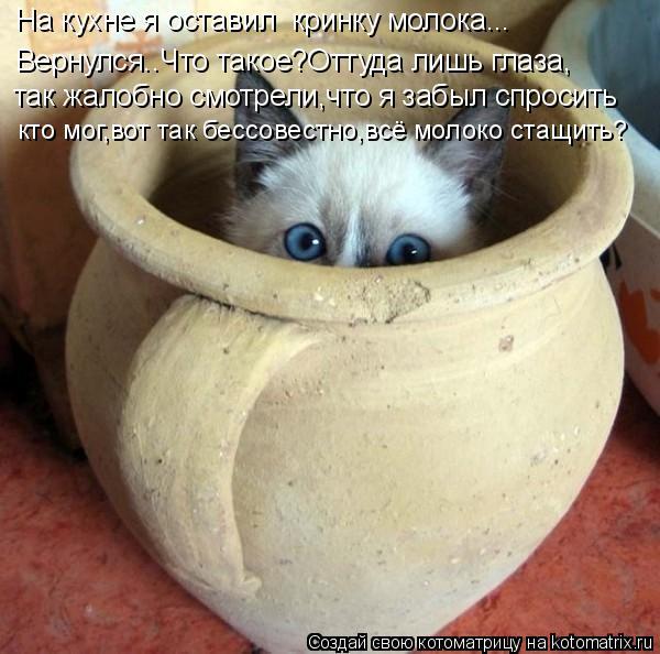 Котоматрица: На кухне я оставил  кринку молока... Вернулся..Что такое?Оттуда лишь глаза, так жалобно смотрели,что я забыл спросить кто мог,вот так бессовес