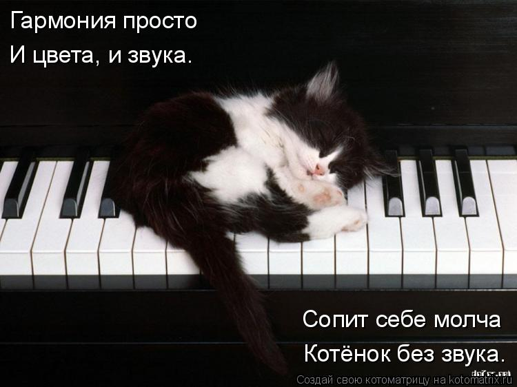 Котоматрица: Гармония просто И цвета, и звука. Сопит себе молча Котёнок без звука.