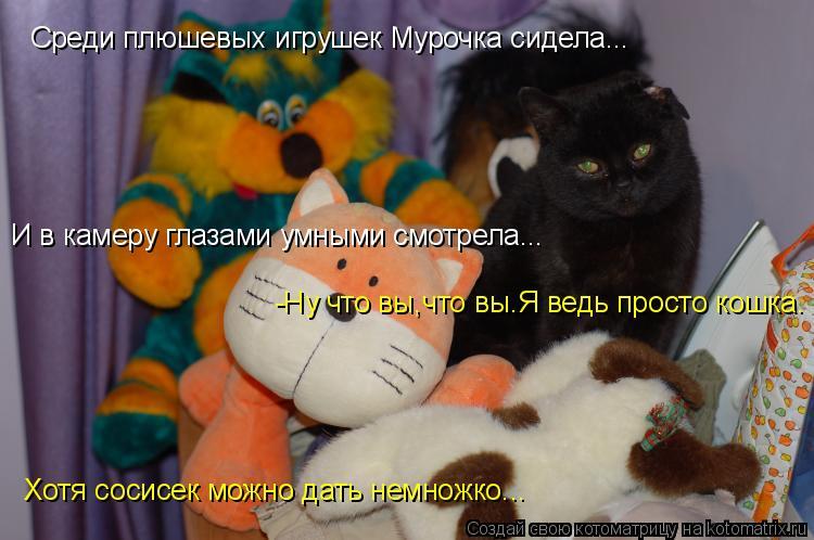 Котоматрица: Среди плюшевых игрушек Мурочка сидела... И в камеру глазами умными смотрела... -Ну что вы,что вы.Я ведь просто кошка. Хотя сосисек можно дать н