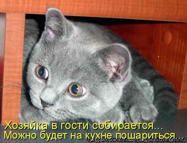 Котоматрица: Хозяйка в гости собирается... Можно будет на кухне пошариться...