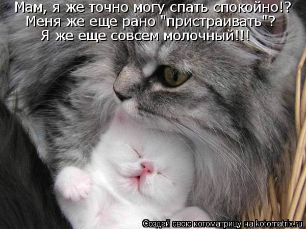 """Котоматрица - Мам, я же точно могу спать спокойно!? Меня же еще рано """"пристраивать""""?"""