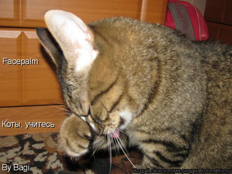 Котоматрица: Facepalm Коты, учитесь By Bagi