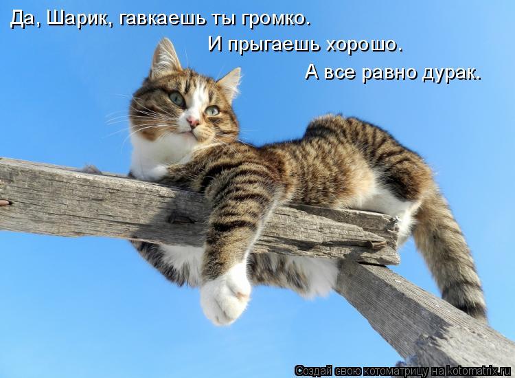 Котоматрица - Да, Шарик, гавкаешь ты громко. И прыгаешь хорошо. А все равно дурак.