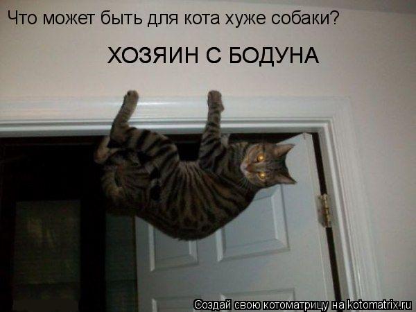 Котоматрица: Что может быть для кота хуже собаки? ХОЗЯИН С БОДУНА ХОЗЯИН С БОДУНА